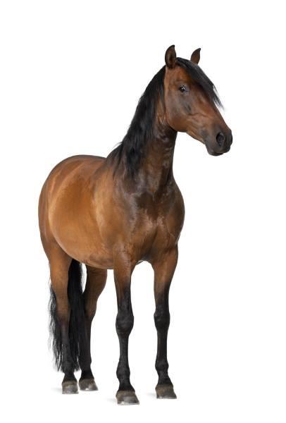 en zaragoza hípica aseguramos tu caballo