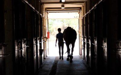 Equipación para montar a caballo