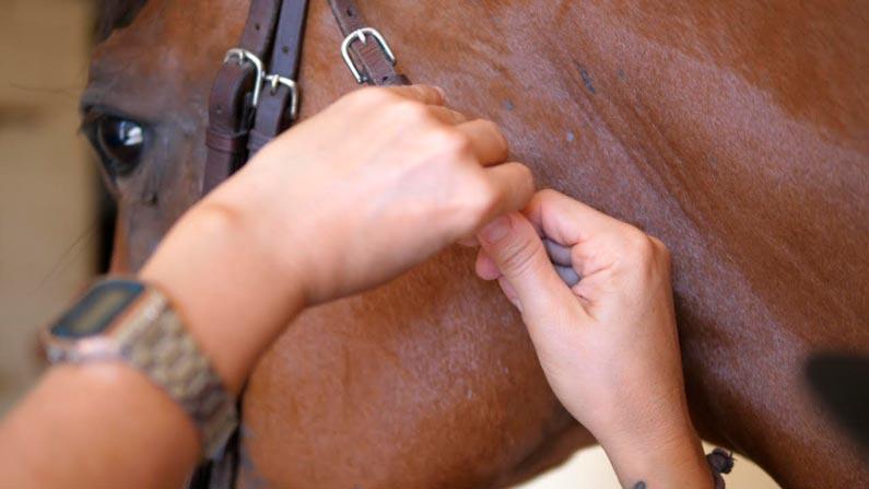 ¿Cómo limpiar el equipo de tu caballo?