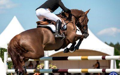 Consejos para comprar un caballo de salto