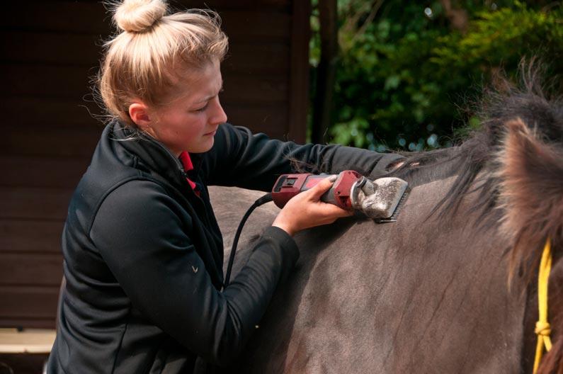 El esquilado de caballos