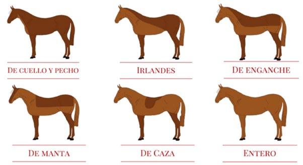 Formas de esquilar a un caballo
